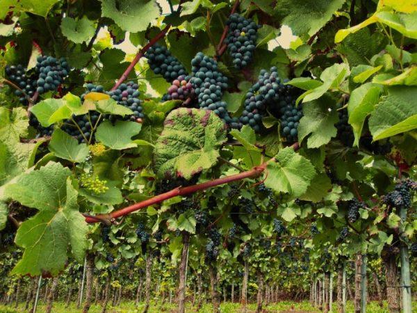 Sustainable-Fruit-Farming.-e1523107845684