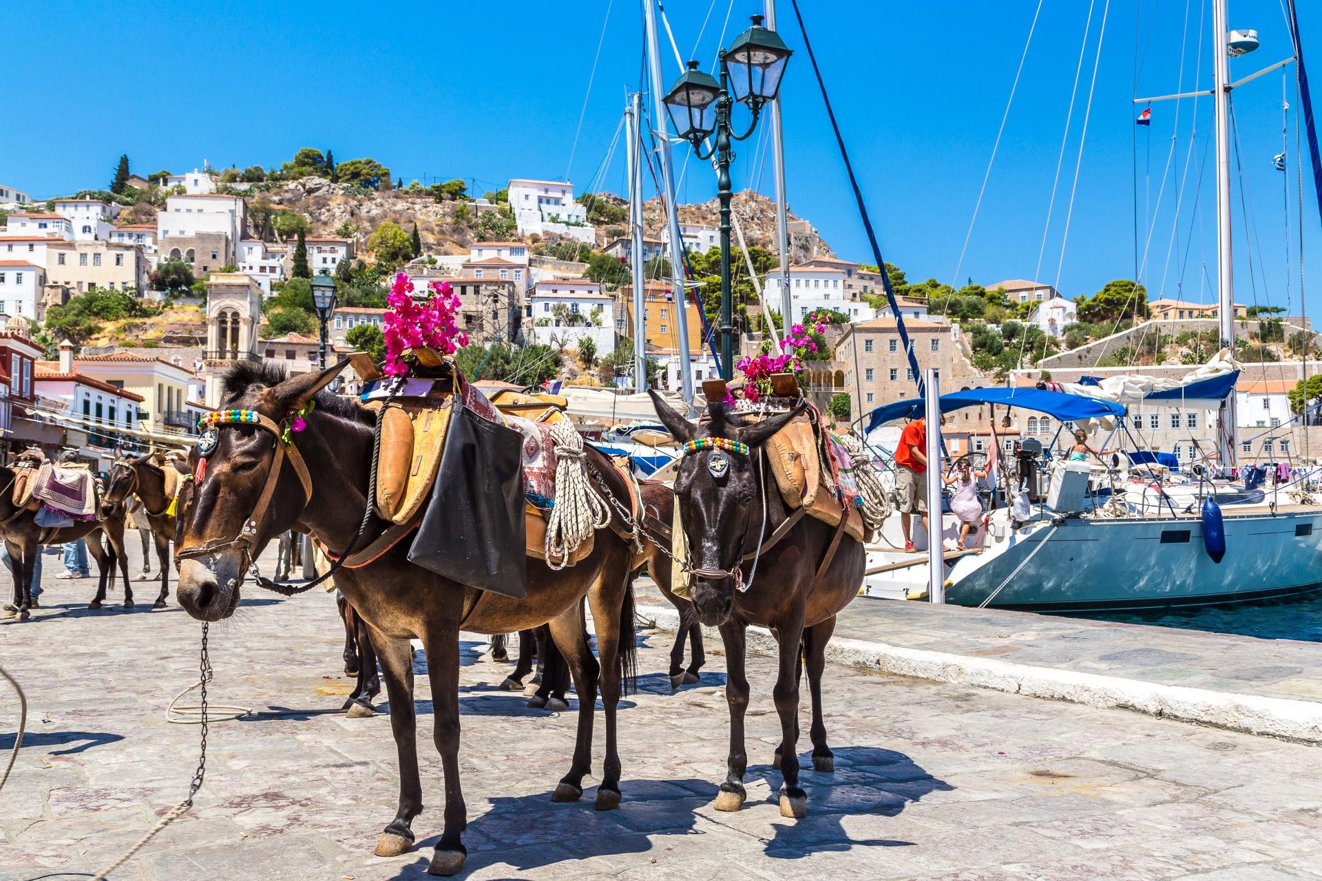 donkeys hydra