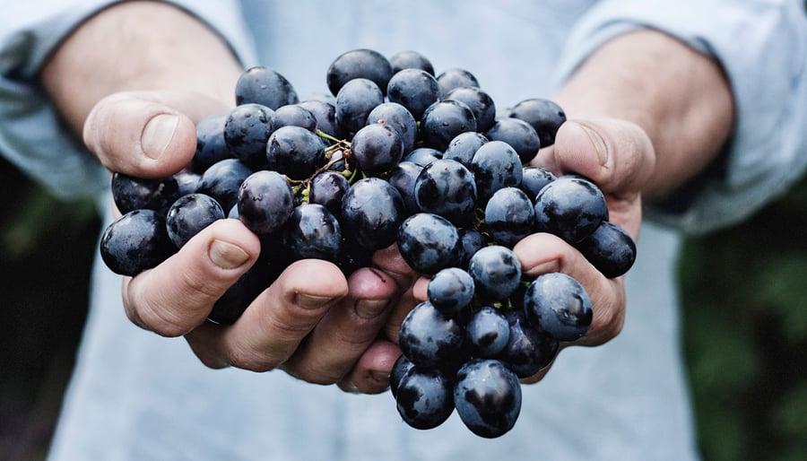 grapes_1170